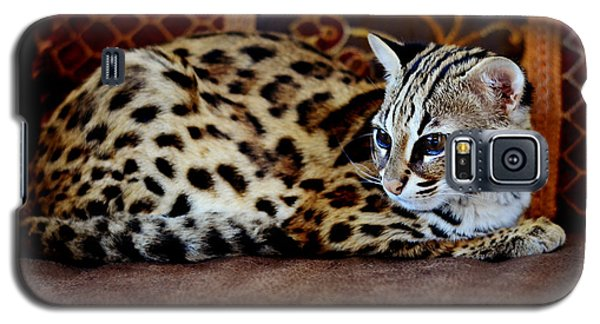 Lounging Leopard Galaxy S5 Case