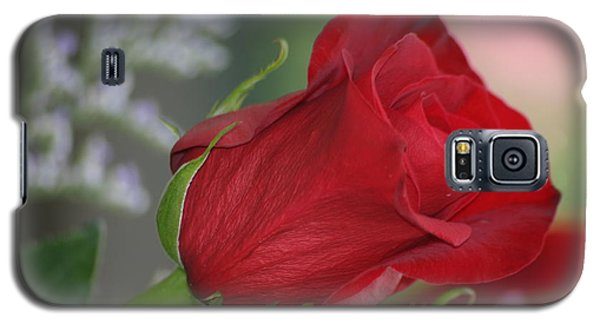 Love Is Forever Galaxy S5 Case by Living Color Photography Lorraine Lynch