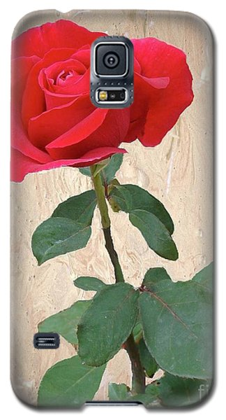 Love Is Like A Red Red Rose Galaxy S5 Case by Janette Boyd