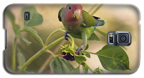 Lovebird On  Sunflower Branch  Galaxy S5 Case by Saija  Lehtonen