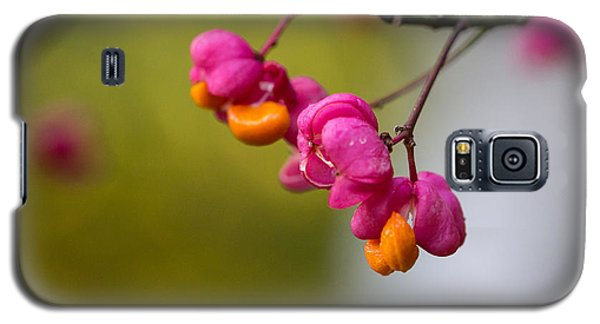 Lovely Colors - European Spindle Flower Seeds Galaxy S5 Case by Jivko Nakev