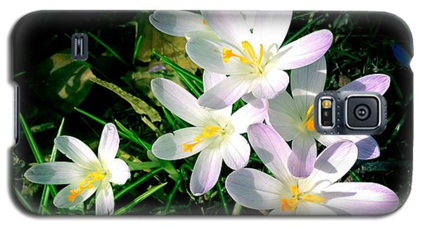 Lovely Flowers In Spring Galaxy S5 Case by Matthias Hauser