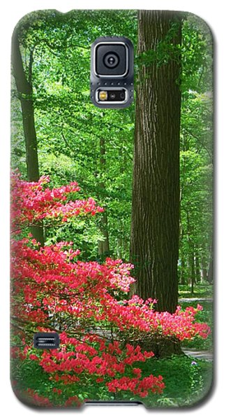 Galaxy S5 Case featuring the photograph Lovely Forest Scene by Jeanette Oberholtzer