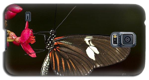 Lovely Longwing Galaxy S5 Case by Bryan Keil