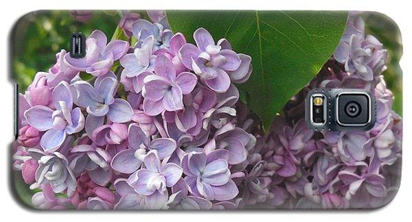 Lovely Luscious Lilacs Galaxy S5 Case by Karen Molenaar Terrell