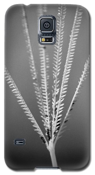 Galaxy S5 Case featuring the photograph Loxahatchee Grass by Bradley R Youngberg