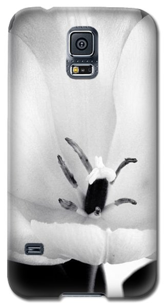 Luminance Galaxy S5 Case by Susan Kinney