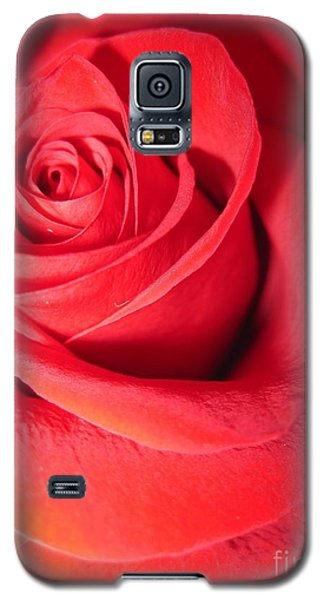 Luminous Red Rose 6 Galaxy S5 Case