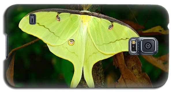 Galaxy S5 Case featuring the photograph Luna Moth by Kathy Baccari