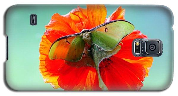 Luna Moth On Poppy Aqua Back Ground Galaxy S5 Case by Randall Branham