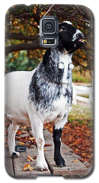 Lunch With Goat Galaxy S5 Case