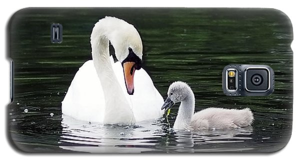 Lunchtime For Swan And Cygnet Galaxy S5 Case
