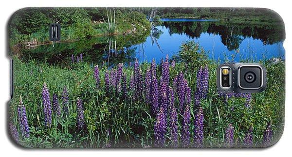 Lupin And Lake-sq Galaxy S5 Case