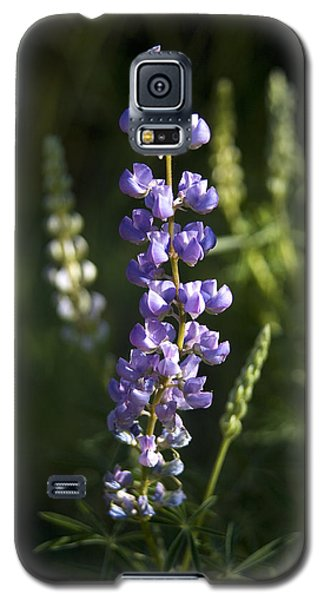 Lupine Echoes Galaxy S5 Case