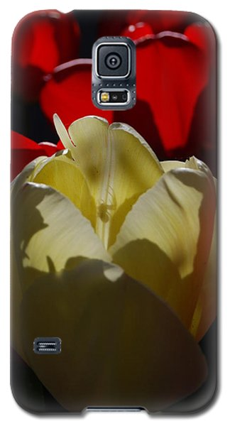 Galaxy S5 Case featuring the photograph Lurking Shadow by Jani Freimann
