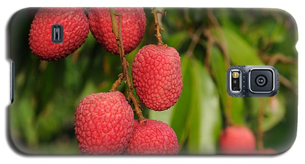 Lychee Fruit On Tree Galaxy S5 Case