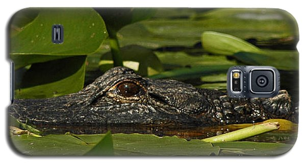 Galaxy S5 Case featuring the photograph Lying In Wait by Vivian Christopher