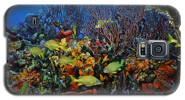 Lynns Reef On A Perfect Day Galaxy S5 Case