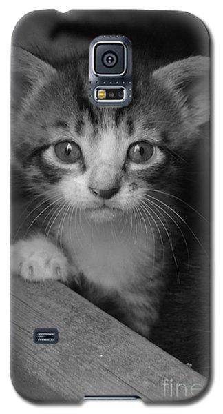 M Kitten Galaxy S5 Case