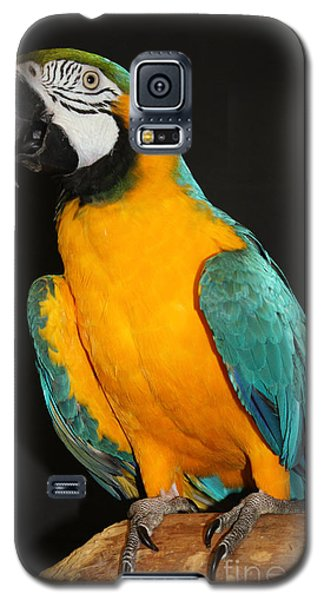 Macaw Hanging Out Galaxy S5 Case