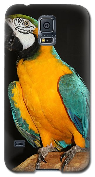 Macaw Hanging Out Galaxy S5 Case by John Telfer