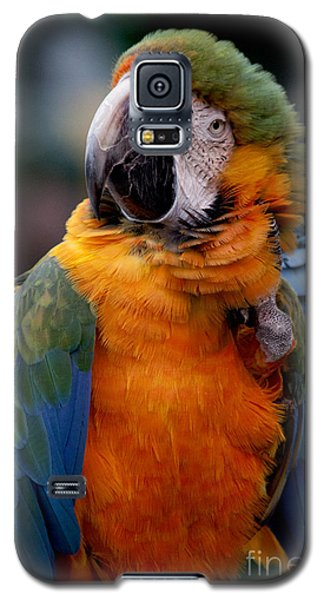 Macaw Galaxy S5 Case by Ivete Basso Photography