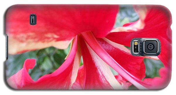Macro Beauty Galaxy S5 Case