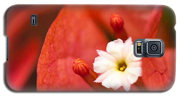 Galaxy S5 Case featuring the photograph Macro Bougainvillea Bloom 1 by Leigh Anne Meeks