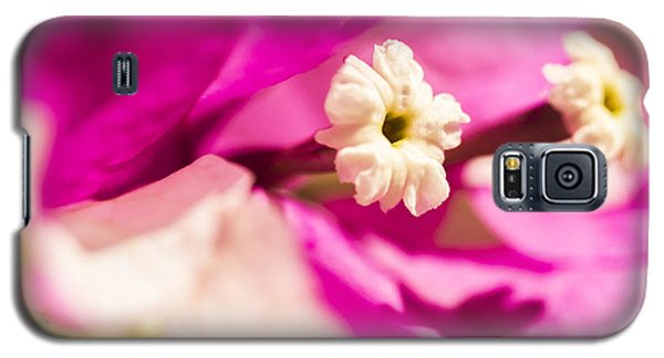 Macro Bougainvillea Bloom 2 Galaxy S5 Case by Leigh Anne Meeks