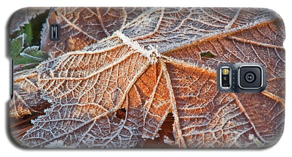 Macro Nature Image Of Fallen Leaf With Frost Galaxy S5 Case