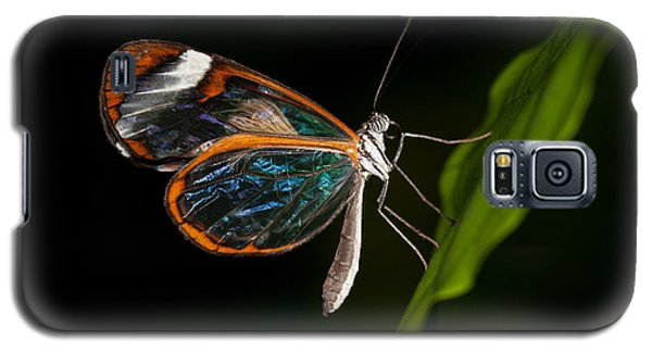 Galaxy S5 Case featuring the photograph Macro Photograph Of A Glasswinged Butterfly by Zoe Ferrie