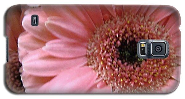 Macro Pink Gerbera Daisies Galaxy S5 Case