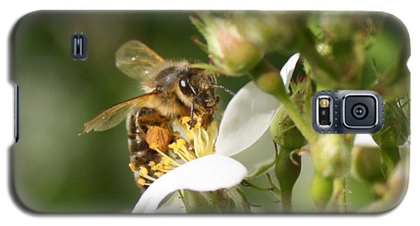 Mad Honeybee Galaxy S5 Case by Lucinda VanVleck