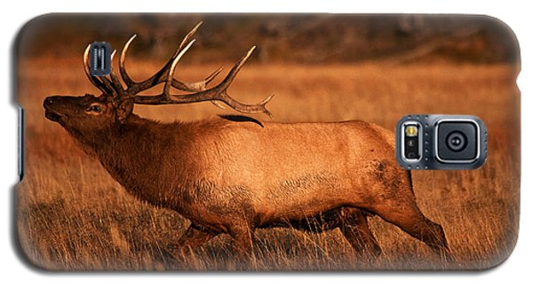 Madison Bull Galaxy S5 Case