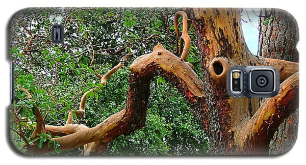 Galaxy S5 Case featuring the photograph Madrone Character by Wendy McKennon