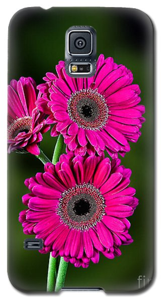 Galaxy S5 Case featuring the photograph Magenta Gerbera by Shirley Mangini