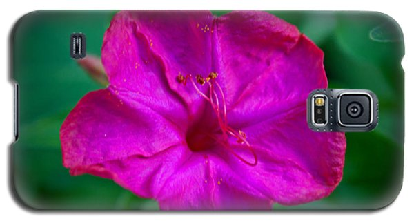 Galaxy S5 Case featuring the photograph Magenta Morning Glory by Jean Haynes