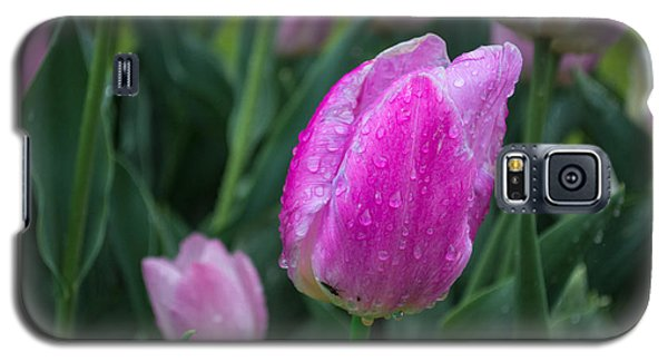 Magenta Tulip In Rain At Brandenburg Galaxy S5 Case