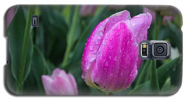Magenta Tulip In Rain At Brandenburg Galaxy S5 Case