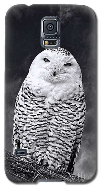 Galaxy S5 Case featuring the photograph Magic Beauty - Snowy Owl by Adam Olsen