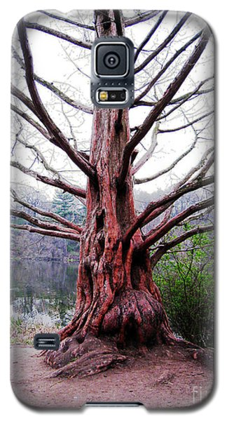 Galaxy S5 Case featuring the photograph Magic Tree by Nina Silver