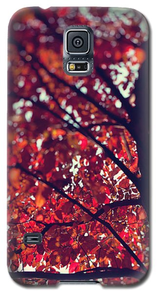 Galaxy S5 Case featuring the photograph Magical Autumn by Kim Fearheiley