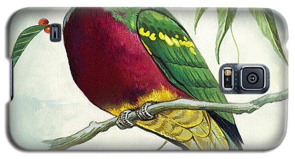 Magnificent Fruit Pigeon Galaxy S5 Case by Bert Illoss