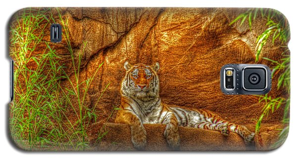Magnificent Tiger Resting Galaxy S5 Case by Andy Lawless