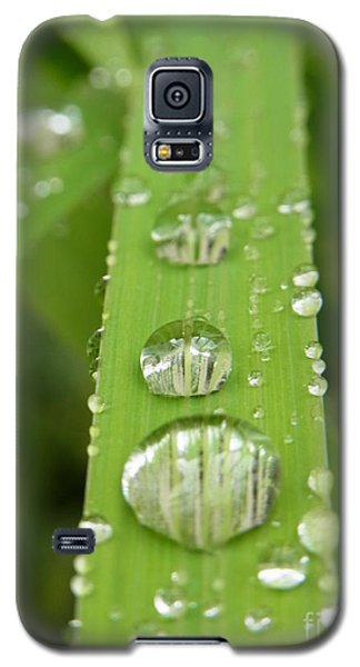 Galaxy S5 Case featuring the photograph Magnifying  by Agnieszka Ledwon