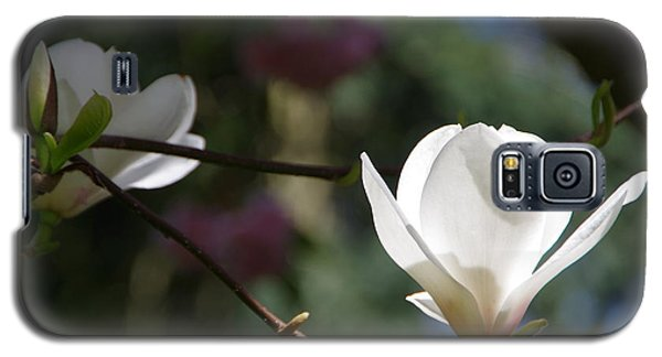 Magnolia Blossoms Galaxy S5 Case