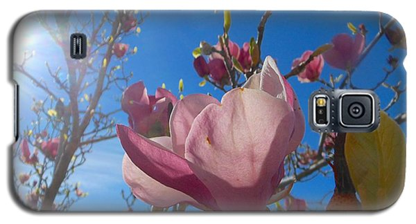 Magnolia Tree 1 Galaxy S5 Case