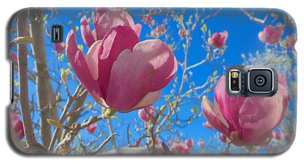 Magnolia Tree Blossoms 2 Galaxy S5 Case