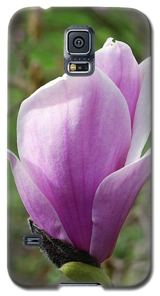 Saucer Magnolia Galaxy S5 Case - Magnolia X Soulangeana 'burgundy' by Neil Joy/science Photo Library