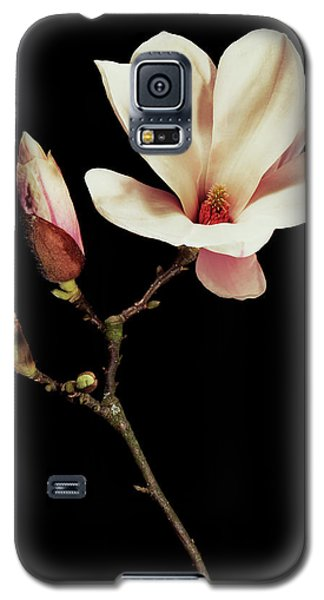 Saucer Magnolia Galaxy S5 Case - Magnolia X Soulangeana Flowers by Gilles Mermet